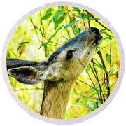 Mule Deer In Jackson Hole Round Beach Towel