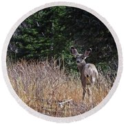 Mule Deer In Utah Round Beach Towel