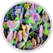 Round Beach Towel featuring the digital art Multi-color Artistic Beaver Tail Cactus by Linda Phelps