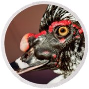 Round Beach Towel featuring the photograph Muscovy by Sue Collura