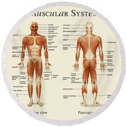 Muscular System Round Beach Towel by Gina Dsgn