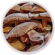 Round Beach Towel featuring the photograph Mushroom Colony by Bill Gallagher