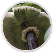 Round Beach Towel featuring the photograph Mushroom Down Under  by Bruce Bley