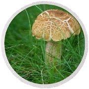 Mushroom In The Grass Round Beach Towel