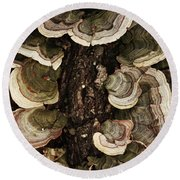 Round Beach Towel featuring the photograph Mushroom Shells By The Lake Shore by Kim Henderson