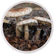 Mushroom Trio Macrolepiota Procera Round Beach Towel