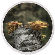 Mushrooms Atop Birch Round Beach Towel
