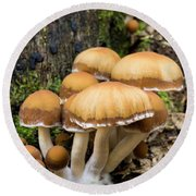 Mushrooms - D009959 Round Beach Towel