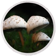 Mushrooms In The Morning Round Beach Towel