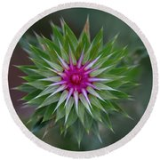 Musk Thistle Bloom Round Beach Towel