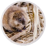 Round Beach Towel featuring the photograph Muskrat Ball by Steven Santamour
