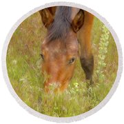Mustang In The Grass Round Beach Towel