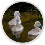 Mute Swan Babes Round Beach Towel