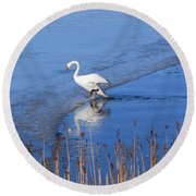 Mute Swan Climbs On The Ice Round Beach Towel