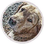 Round Beach Towel featuring the photograph My Boy by Rhonda McDougall