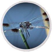 My Favorite Dragonfly Round Beach Towel