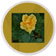 My First Yellow Rose Round Beach Towel