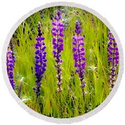 Round Beach Towel featuring the photograph My Five Lupines by Jennifer Lake
