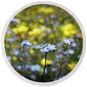 Myosotis With Yellow Flowers Round Beach Towel