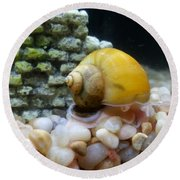 Round Beach Towel featuring the photograph Mystery Snail by Robert Knight