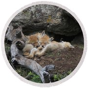 Round Beach Towel featuring the photograph Nap Time by Steve Stuller