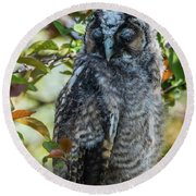Round Beach Towel featuring the photograph Napping Long-eared Owlet by Yeates Photography