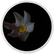 Round Beach Towel featuring the photograph Narcissus by Susan Capuano