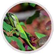 Native Anole Round Beach Towel