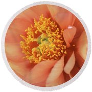 Natural Peach Beauty Round Beach Towel