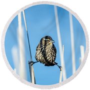 Round Beach Towel featuring the photograph Nature's Circus by Steven Santamour