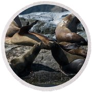 Round Beach Towel featuring the photograph Nature's Music - Wildlife Art by Jordan Blackstone
