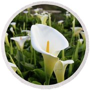 Natures Perfection Round Beach Towel