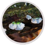 Round Beach Towel featuring the photograph Natures Ruffles - Cascade Wi by Mary Machare