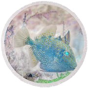 Round Beach Towel featuring the photograph Nautical Beach And Fish #2 by Debra and Dave Vanderlaan
