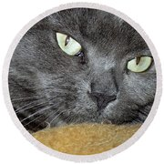 My Nellie-belle's Catitude Round Beach Towel