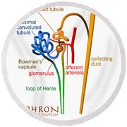 Round Beach Towel featuring the digital art Nephron Labels #1 by Russell Kightley
