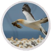 Round Beach Towel featuring the photograph Nest Building by Werner Padarin