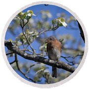 Round Beach Towel featuring the photograph Nest Building by Douglas Stucky