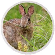 Nesting Rabbit Round Beach Towel by Terry DeLuco