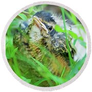 Round Beach Towel featuring the photograph Nestling, Juvenile Male American Robin by A Gurmankin