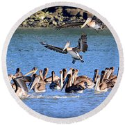 Round Beach Towel featuring the photograph New Arrivals by AJ Schibig