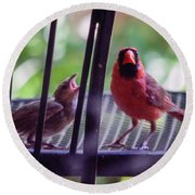 New Baby Cardinal Round Beach Towel
