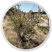 New Mexico Cholla Round Beach Towel