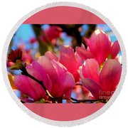 New Orleans In The Dead Of Winter Spring Japanese Magnolias Round Beach Towel by Michael Hoard