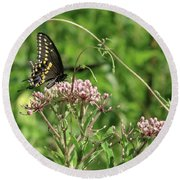 Male American Swallowtail Papilio Polyxenes Round Beach Towel