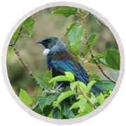 New Zealand Tui Round Beach Towel