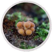 Newborn Mushroom Close-up Round Beach Towel