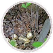 Newly Hatched Ruffed Grouse Chicks Round Beach Towel