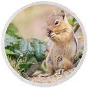 Nibble Break Round Beach Towel