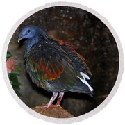 Round Beach Towel featuring the photograph Nicobar Pigeon 2 by Elaine Manley